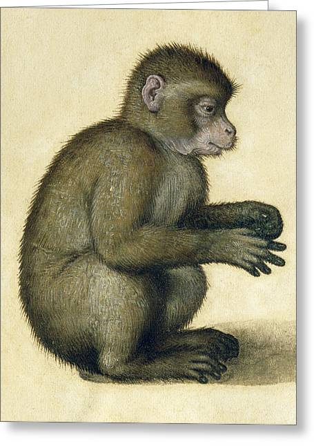Crouching Greeting Cards - A Monkey Greeting Card by Albrecht Durer