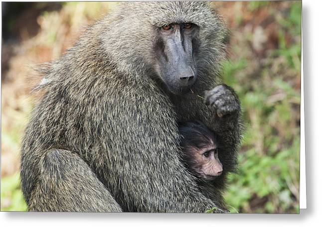 Caring Mother Greeting Cards - A Monkey With Its Baby In The Maasai Greeting Card by Diane Levit