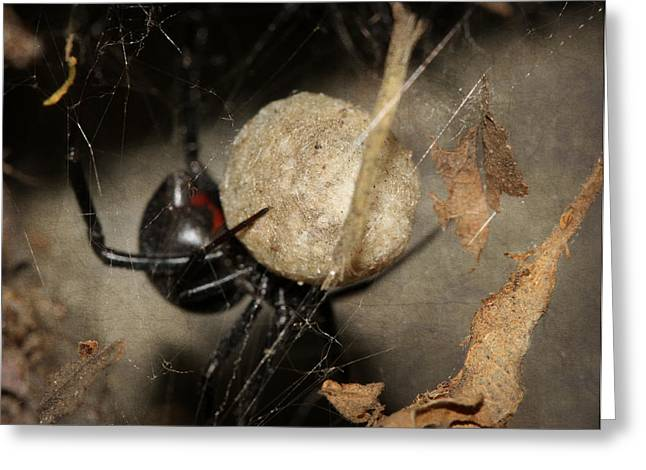 Spider And Fly Greeting Cards - A Mothers Den Greeting Card by Melanie Lankford Photography
