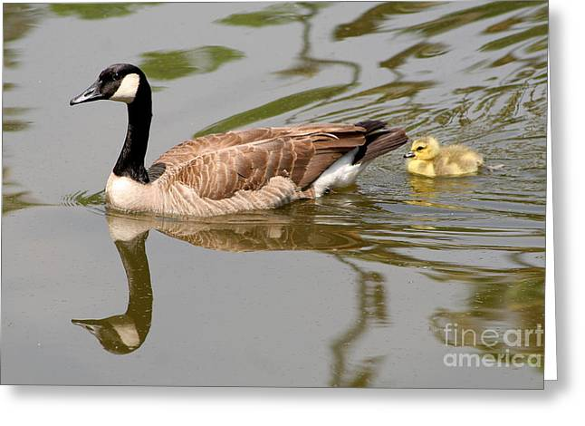 A Mother's Love Greeting Card by Bob and Jan Shriner