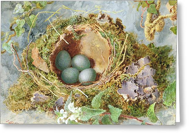 Moss Drawings Greeting Cards - A Nest Of Eggs, 1871 Greeting Card by Jabez Bligh