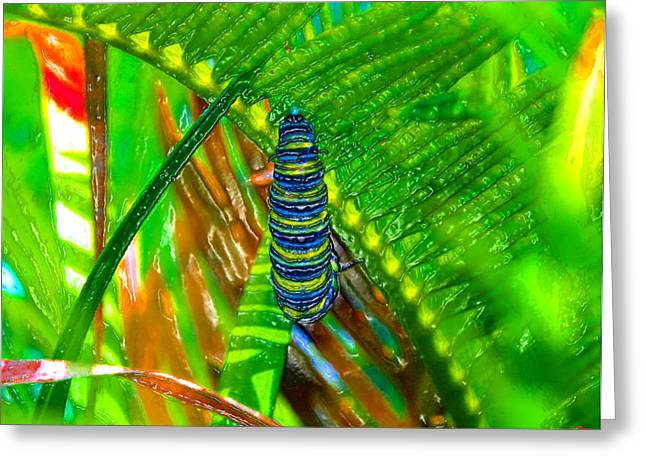 Cocoon Digital Greeting Cards - A New Beginning Greeting Card by David Lee Thompson