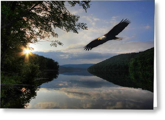 Eagles Greeting Cards - A New Beginning Greeting Card by Lori Deiter