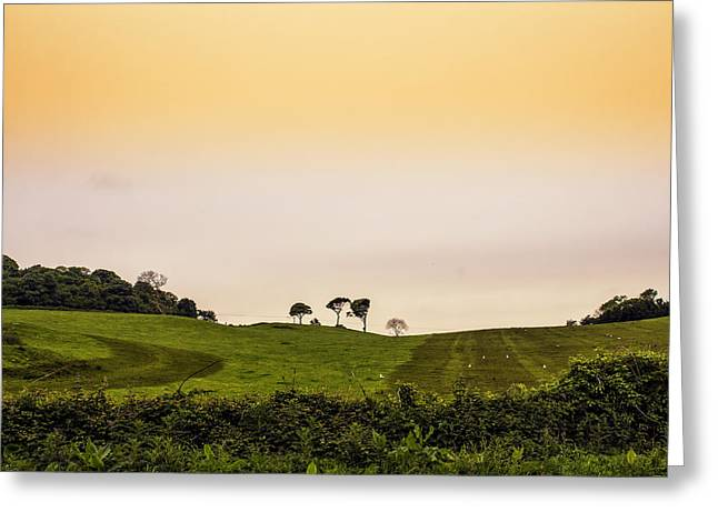 Herbage Greeting Cards - A New Dawn A New Day Greeting Card by Nomad Art And  Design
