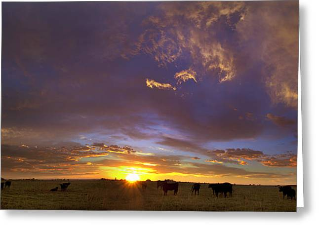 A Sunny Morning Greeting Cards - A New Dawn  Greeting Card by Steven Reed