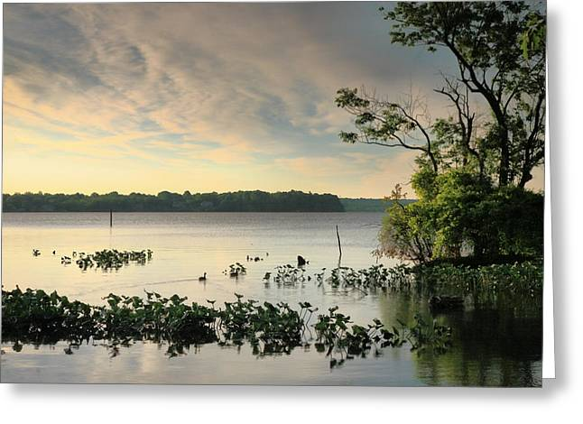 River Prints Greeting Cards - A New Day On The River III Greeting Card by Steven Ainsworth