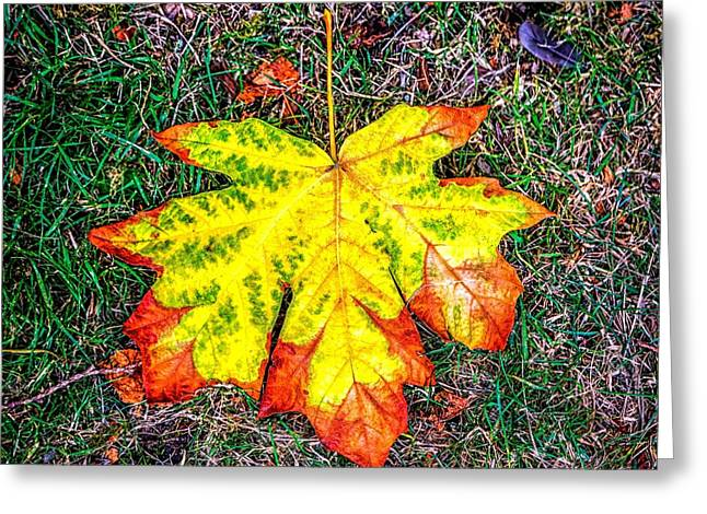 Jon Burch Photography Greeting Cards - A New Leaf Greeting Card by Jon Burch Photography
