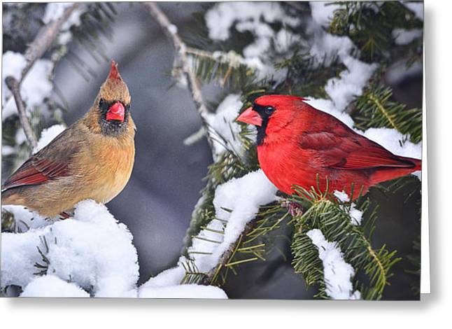 Male Cardinals In Snow Greeting Cards - A Pair of Cardinals Talking Greeting Card by Peg Runyan
