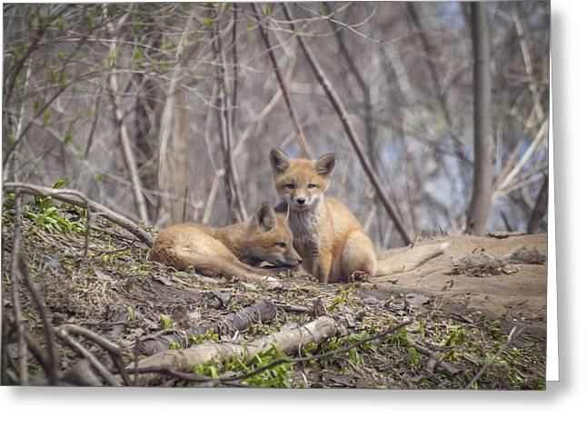 Babys Greeting Cards - A Pair of Cute Kit Foxes 2 Greeting Card by Thomas Young