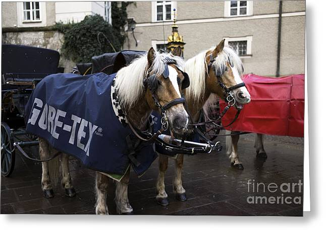 Horse And Buggy Greeting Cards - A Pair of Ponies in Salzburg Greeting Card by John Rizzuto