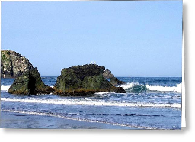 A Pair Of Seagulls On A Rock Greeting Card by Will Borden