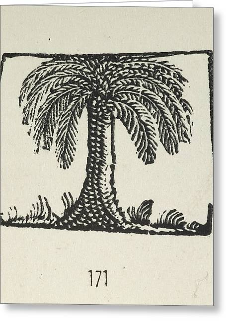 A Palm Tree Greeting Card by British Library