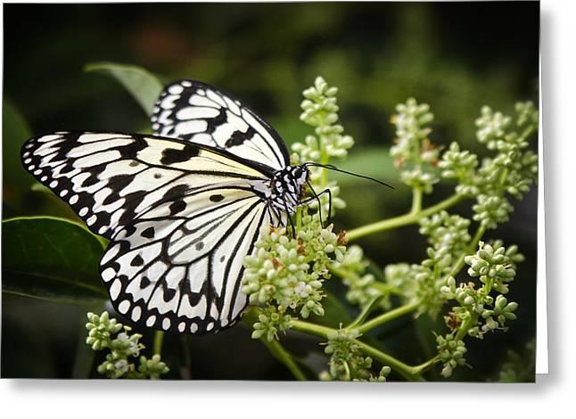 Kites Greeting Cards - A Paper Kite Butterfly  Greeting Card by Saija  Lehtonen