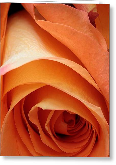 A Pareo Rose Greeting Card by Joe Kozlowski
