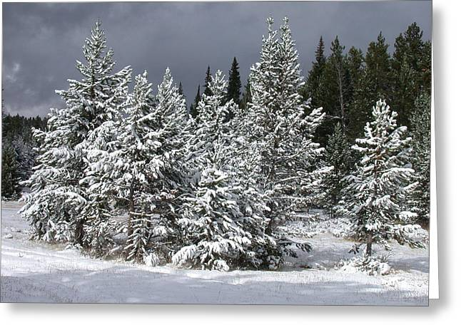 Snow Tree Prints Greeting Cards - A Patch Of Sun Greeting Card by Shane Bechler