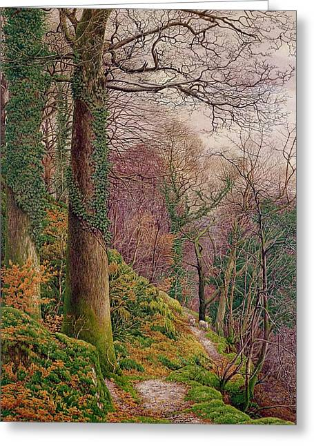 Moss Greeting Cards - A Path In The Wood Greeting Card by Edward Bentley
