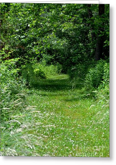 A Path Of Clover Greeting Card by Eva Thomas