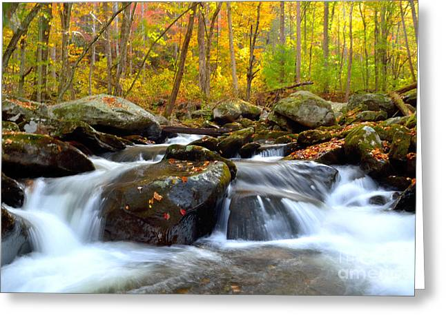 Peaceful Scene Greeting Cards - A Peaceful Colorful Waterfall and Forest Setting Greeting Card by Patricia Twardzik