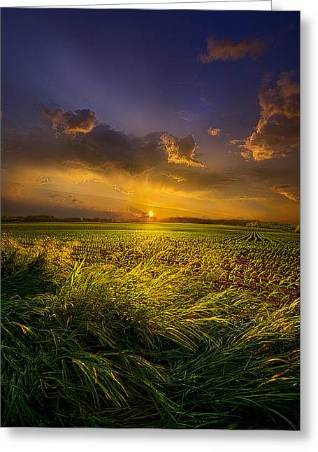 A Peaceful Easy Feeling Greeting Card by Phil Koch