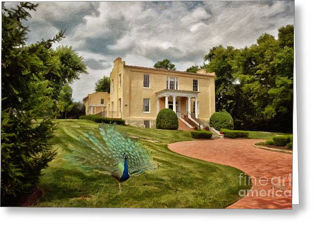 Harpers Ferry Digital Greeting Cards - A Peacock At Beallair Greeting Card by Lois Bryan
