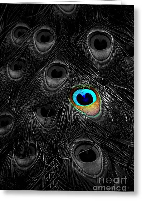 Mike Nellums Greeting Cards - A Peacock Feather Greeting Card by Mike Nellums