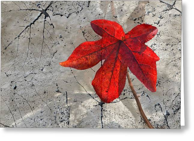 Sandi Oreilly Greeting Cards - A Perfect Fall Red Greeting Card by Sandi OReilly