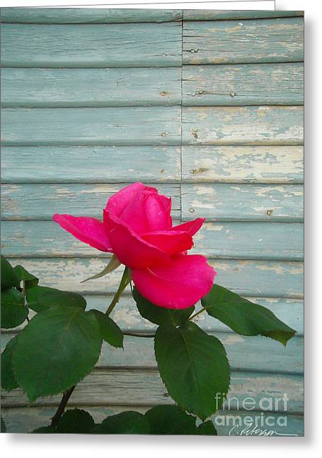 Pencil On Canvas Photographs Greeting Cards - A perfect rose for my love Greeting Card by Cathy Peterson