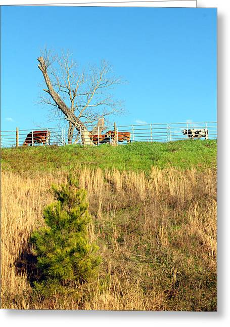Opp Greeting Cards - A Cows Roadside View Greeting Card by Jennifer Robin