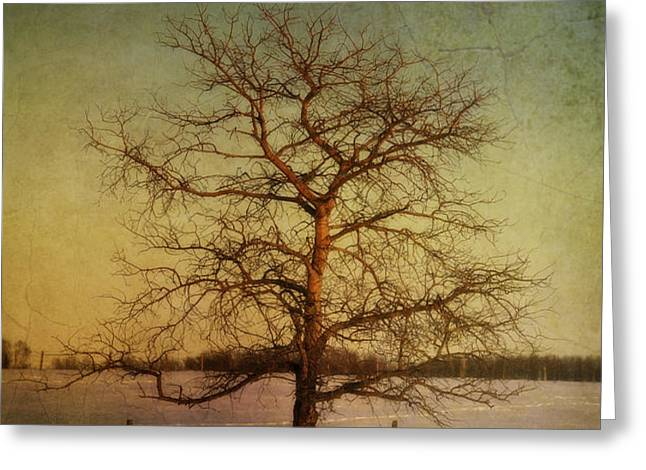 A Pictorialist Photograph Of A Lone Greeting Card by Roberta Murray