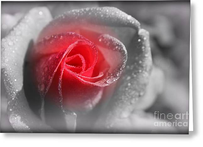 Water Drops On Rose Greeting Cards - A Pinch of Pink Greeting Card by Clare Bevan
