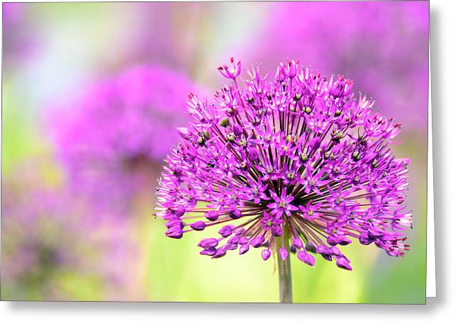 A Pink Flower Greeting Card by Toppart Sweden