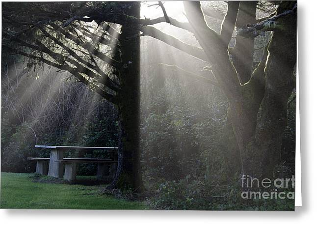 Streaming Light Greeting Cards - A Place For You Oregon Greeting Card by Bob Christopher