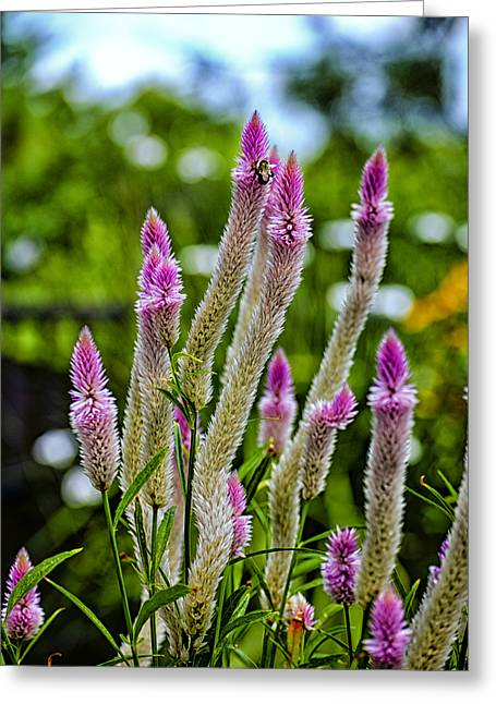 Plantlife Greeting Cards - A Place of Delight Greeting Card by Christi Kraft