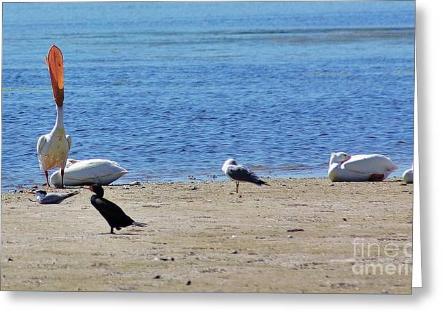 Beach Photography Greeting Cards - A Place To Rest Greeting Card by Chuck  Hicks