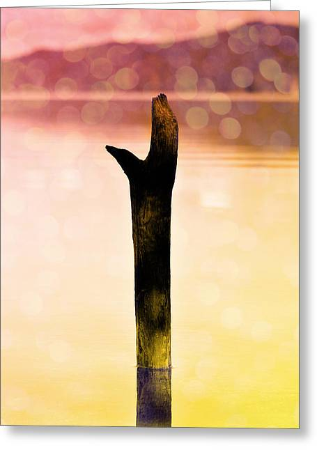 Northern Pole Star Greeting Cards - A pole in the water Greeting Card by Toppart Sweden