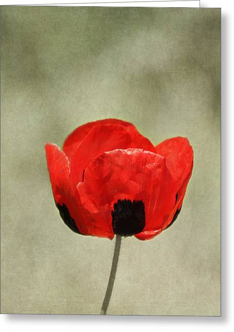 Kim Photographs Greeting Cards - A Pop of Red and Black Greeting Card by Kim Hojnacki