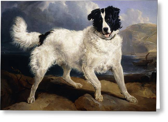 Neptune Greeting Cards - A Portrait of Neptune Greeting Card by Sir Edwin Landseer