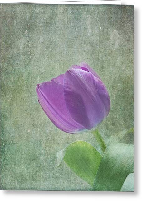 Lilac Tulip Flower Greeting Cards - A Promise Greeting Card by Kim Hojnacki