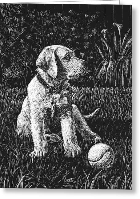 Ball Games Greeting Cards - A Puppy With The Ball Greeting Card by Irina Sztukowski