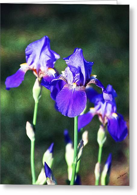 Love Asheville Greeting Cards - A Purple Iris Family Greeting Card by John Haldane