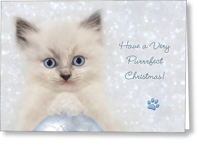 Ragdoll Greeting Cards - A Purrrfect Christmas Greeting Card by Lori Deiter
