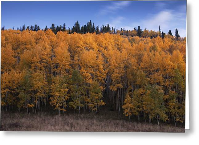 Gloaming Greeting Cards - A Quiet Autumn Beginning Greeting Card by Morris  McClung