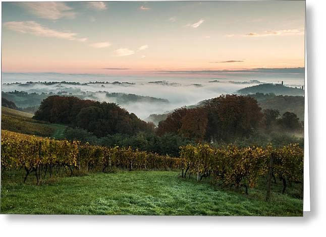 Vineyard Landscape Photographs Greeting Cards - A quiet morning on the hill Greeting Card by Davorin Mance