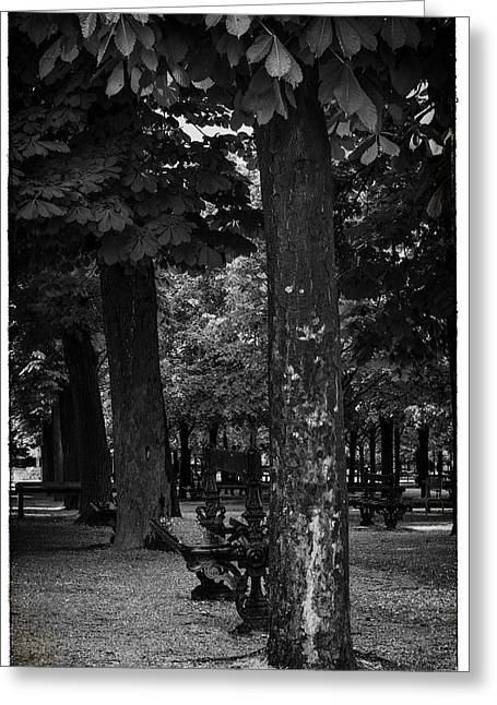 Paris Trees Nature Scenes Greeting Cards - A Quiet Spot - Bench and Trees in Paris Greeting Card by Nomad Art And  Design