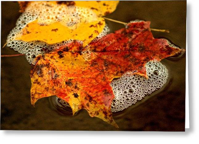 Autumn Leaf On Water Greeting Cards - A Range of Orange Greeting Card by  Graham Storms