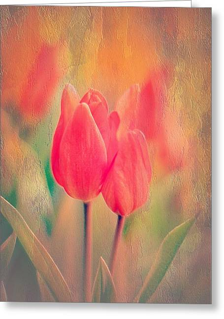 Photos With Red Greeting Cards - A Red Tulip Moment Greeting Card by Anne Macdonald
