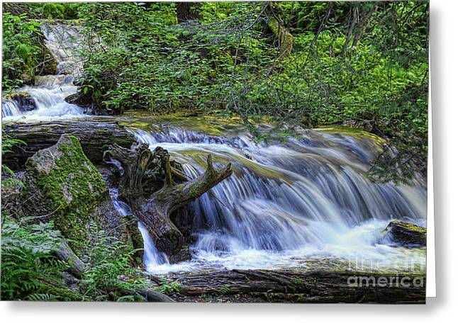A Restful Stream Greeting Card by Priscilla Burgers