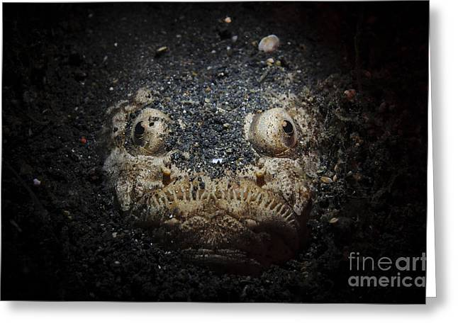 Osteichthyes Greeting Cards - A Reticulate Stargazer Buried In Sand Greeting Card by Steve Jones