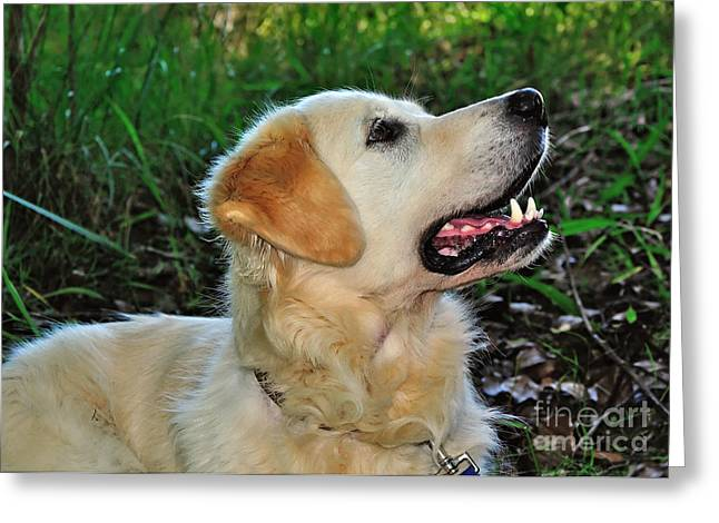 Black Nose Greeting Cards - A Retrievers Loving Glance Greeting Card by Kaye Menner
