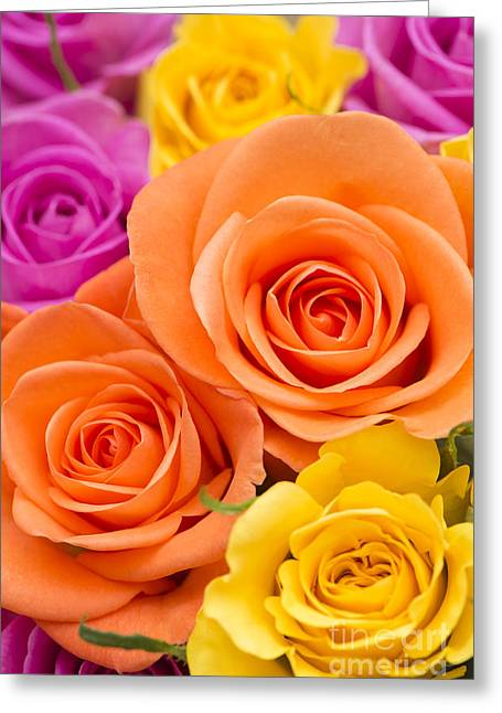 Close Focus Floral Greeting Cards - A Riot of Roses Greeting Card by Anne Gilbert